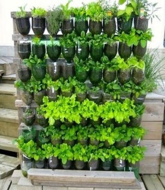 Unusual Vegetable Garden Ideas For Home Backyard 09