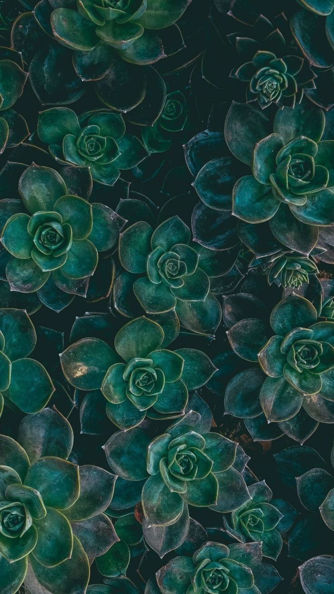 Wallpaper Aesthetic Green Background Hd