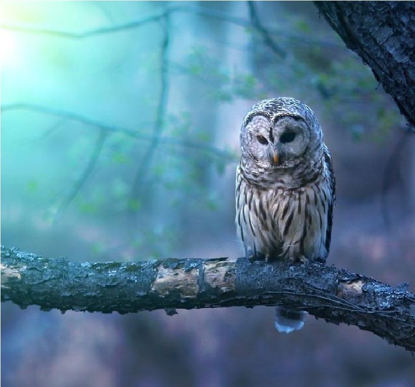 23 Beauty Owl Photography 99inspiration