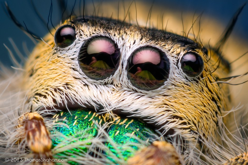 Amazinng Macro Photography Spider