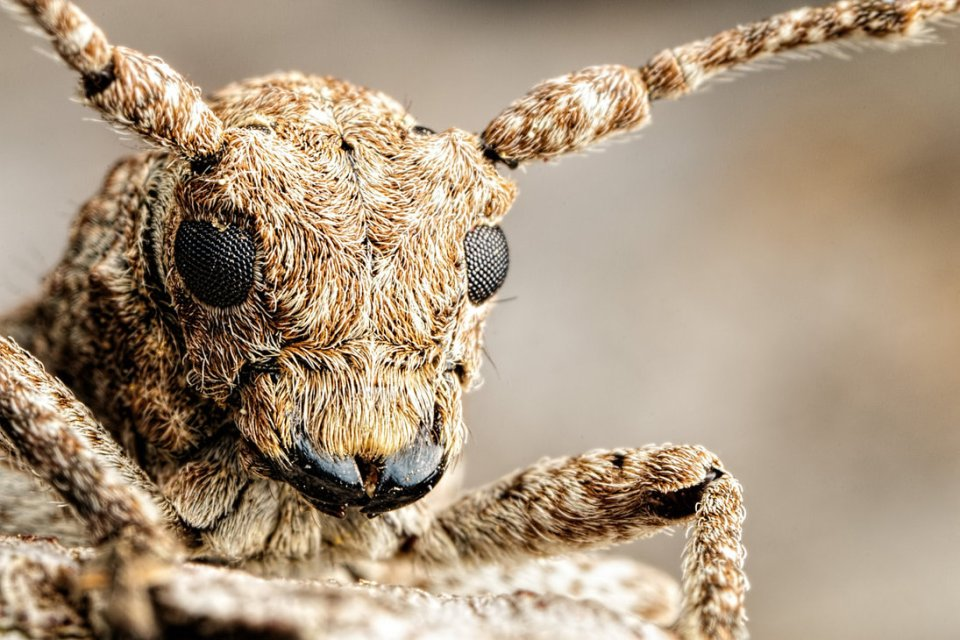 incredible close-up macro photography of insect 2