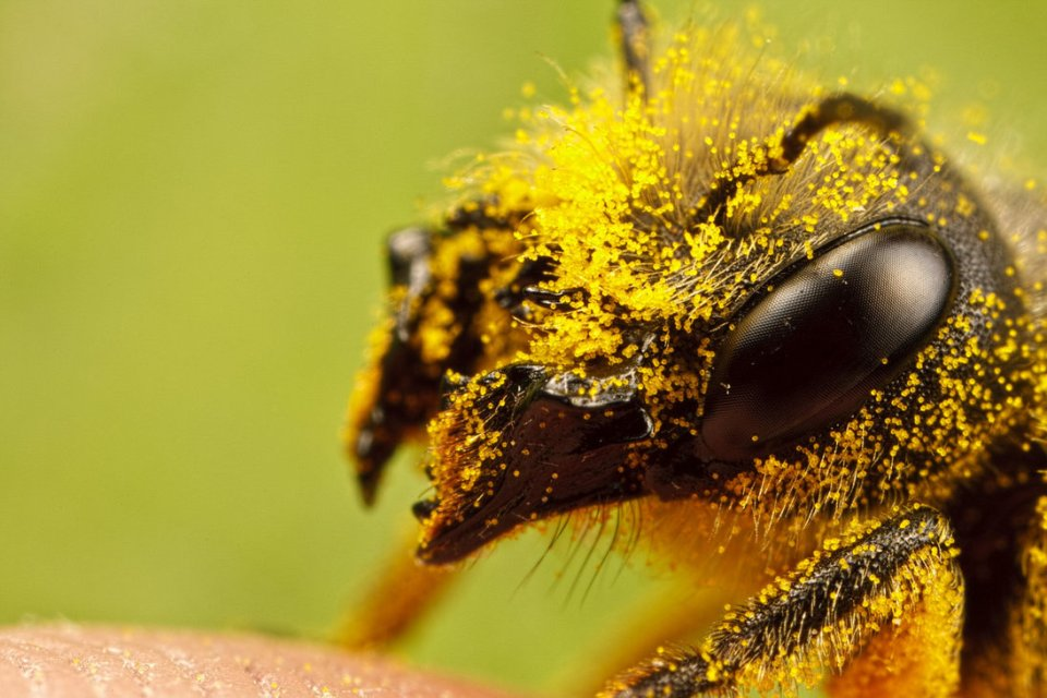 incredible close-up macro photography of insect 6