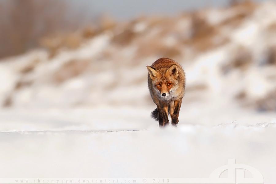 life captured photography of animal 11