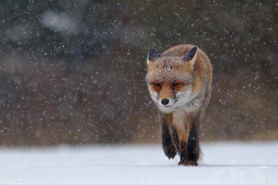 life captured photography of animal 12