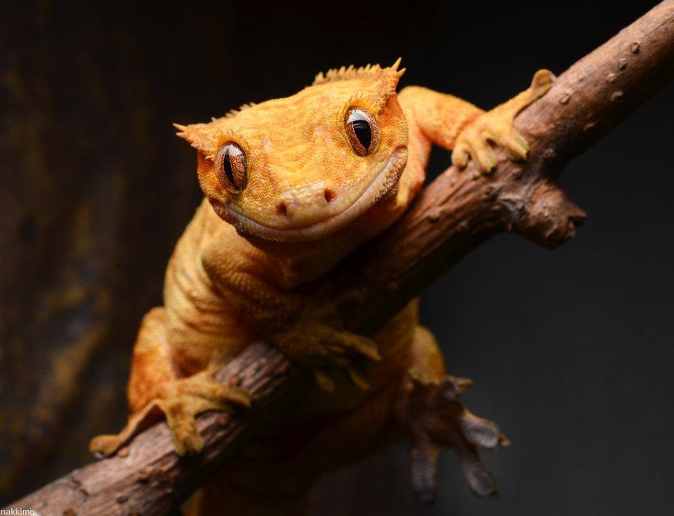 Cute Gecko Face photos 2