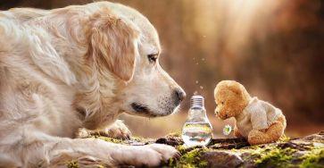 Unlikely Animal Friends 11
