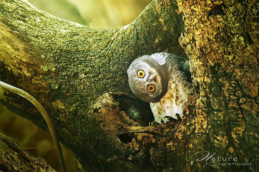 best owl photography captures 3
