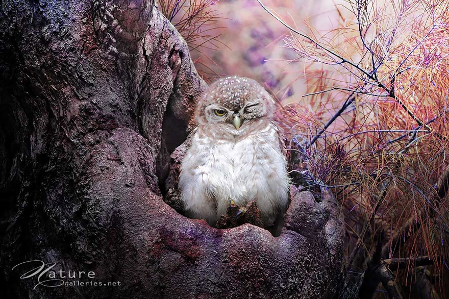 best owl photography captures 4