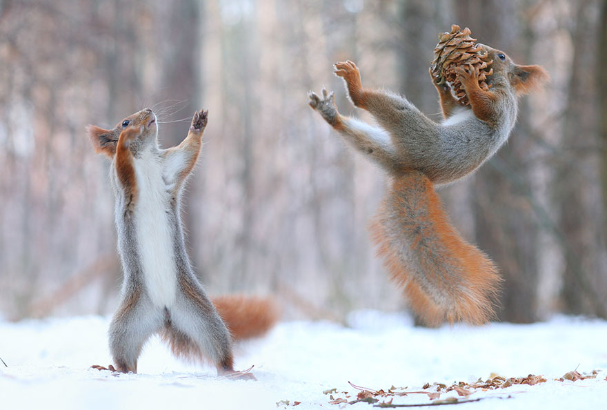 Adorable Squirrel photos - Vadim Trunov 01