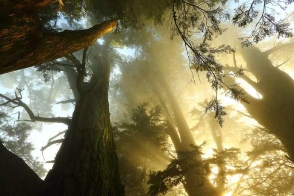 Beauty forest lanndscape photography 01