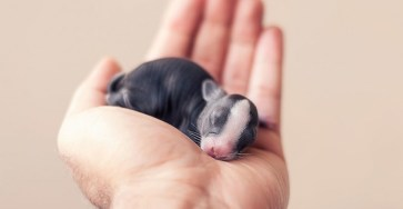 Photographer Documents The Growth From Birth of Baby Rabbits