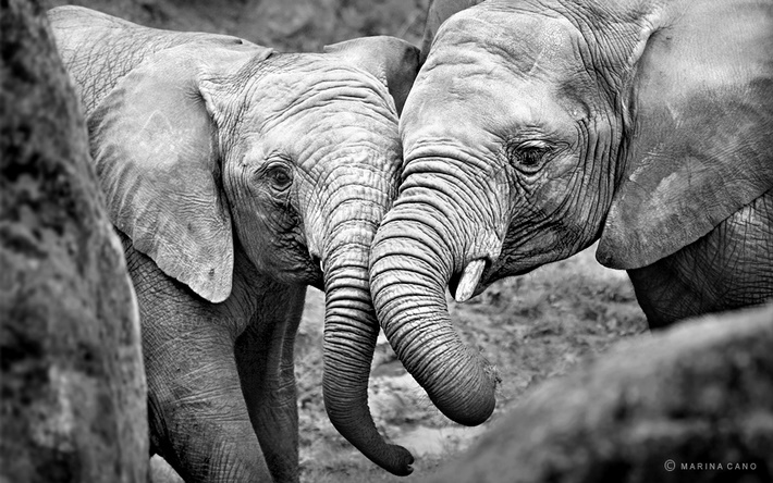 Elephants wild animals photography by Marina Cano 01
