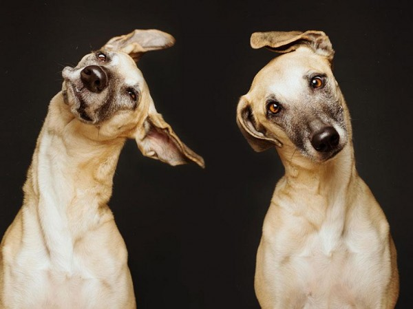 Adoroble Dogs portraits elke vogelsang