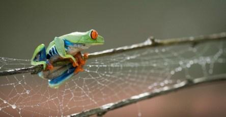 Beautiful macro photos of frog by Nicolas-Reusens