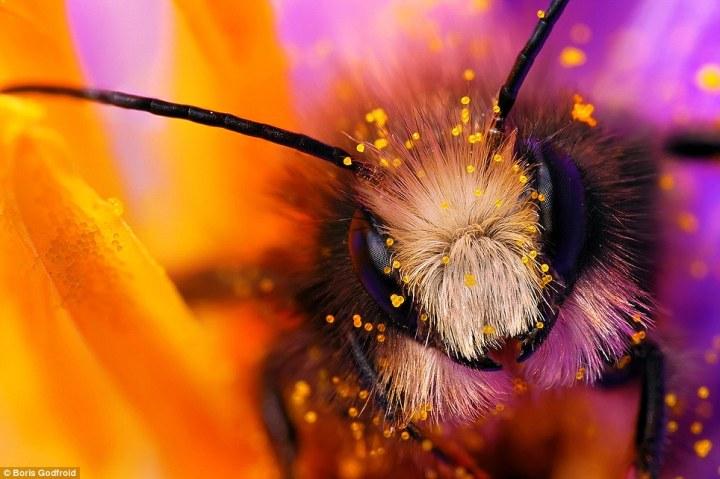 Stunning macro photography of bee