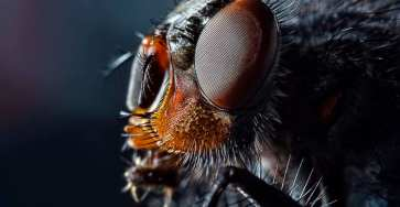 Best Insects Macro Photography by Sergey Babaev