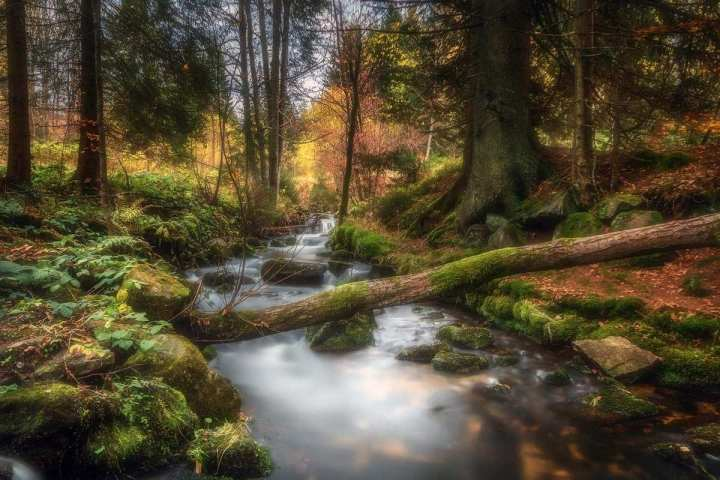 Beautiful Forest Landscape Photography by Daniel Herr 01