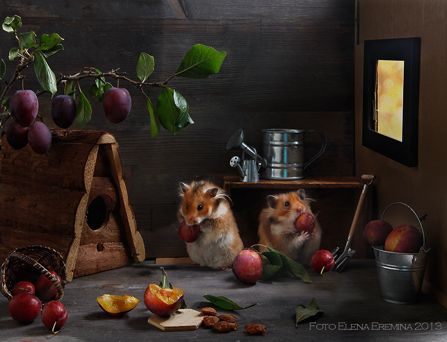 Adorable photos of hamsters life 88