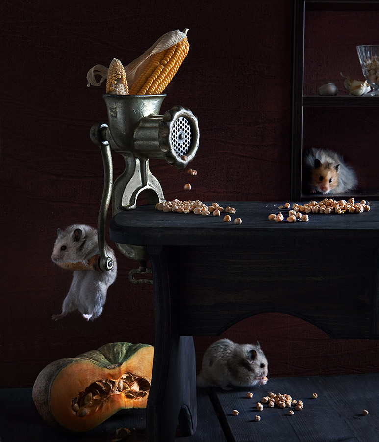 Creative photography of hamsters life by Elena Eremina 99