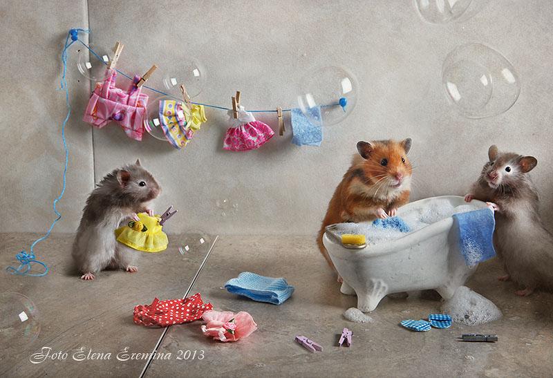 Cute photos of hamsters life by Elena Eremina 77.
