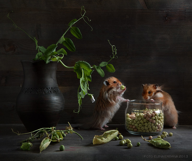 Cute photos of hamsters life by Elena Eremina 88