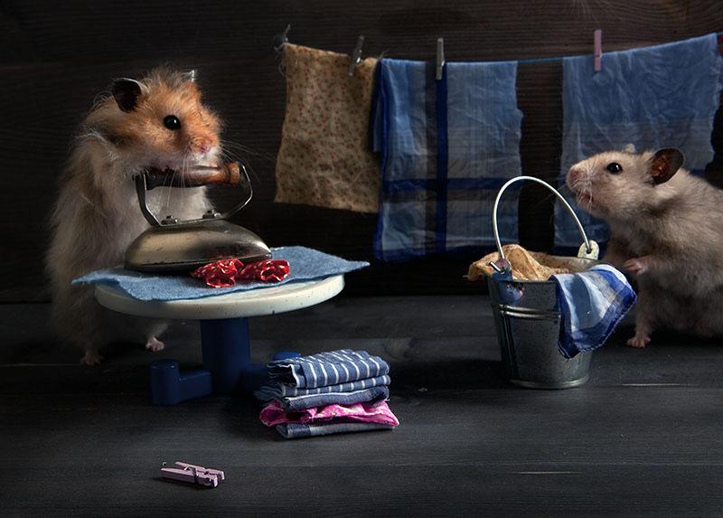 Funny photos of hamsters life by Elena Eremina 99