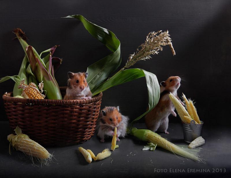 Surreal Animals Photography 99