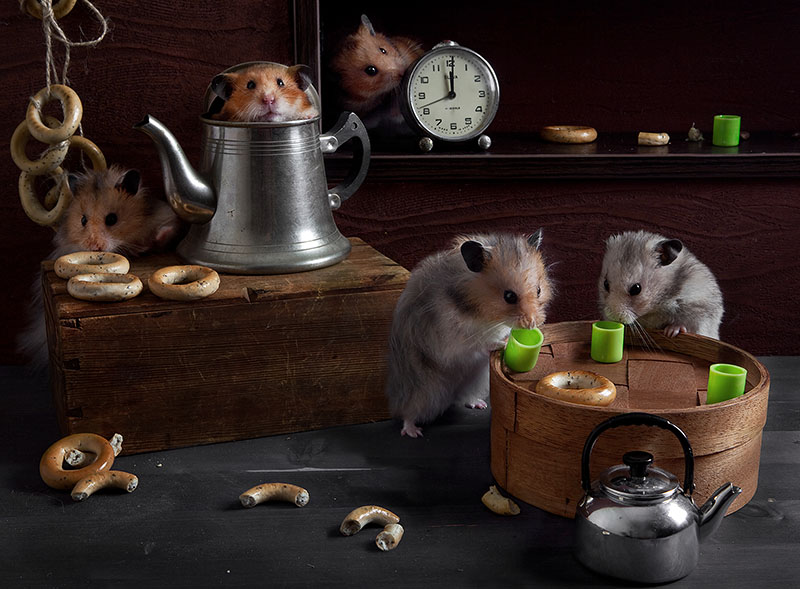 Surreal Hamster life photos 99