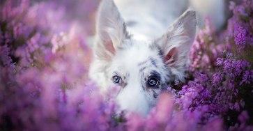 Beautiful Dog Portraits by Alicja Zmyslowska
