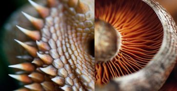 Unusual Macro Photography Ideas 44