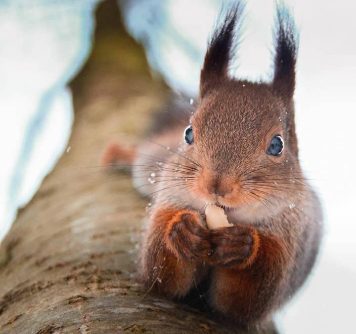 Best Capture of the Wild Animals by Konsta Punkka 99