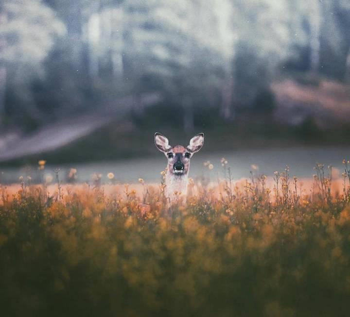 Wonderful Capture of the Wild Animals by Konsta Punkka