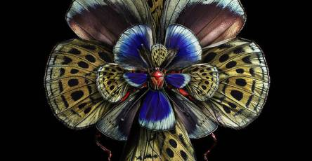 Stunning Rare Butterfly Specimens Documented