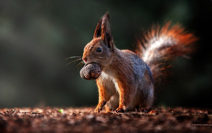 cute-animal-portraits-ideas-by-sergey-polyushko-77