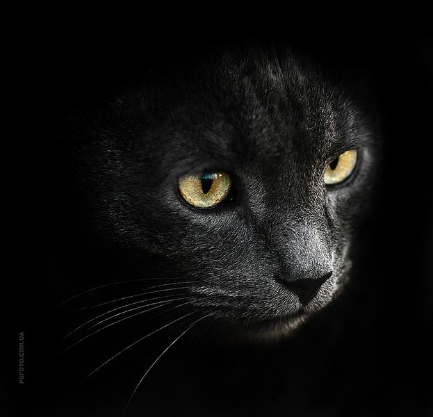 cute-cat-portraits-ideas-by-sergey-polyushko