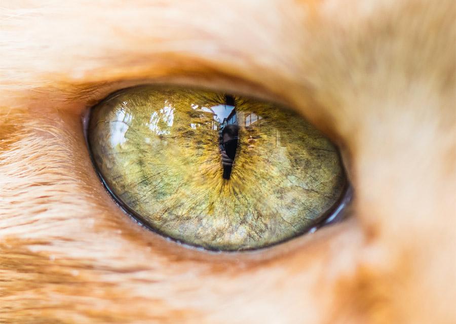 Macro Shots of Cat Eyes by Andrew Marttila Fantastical Macro Shots of ...