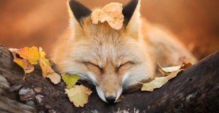 [Trending] Meet Freya, The Beautiful Fox I Photographed In Polish Woods