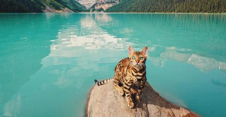 Wonderful Adventures Suki the Cat Canada 1
