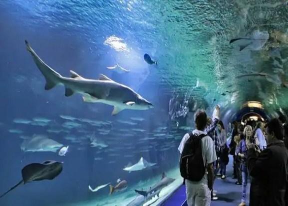 The Oceanographic Oceanarium