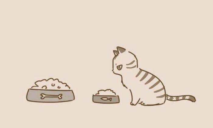 animal-friends-cat-dog-comics-lynal-6