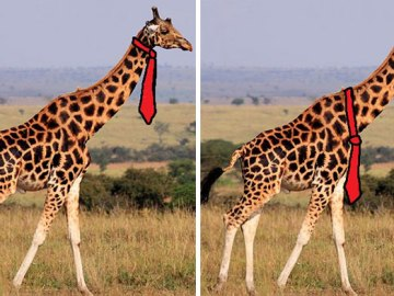 how-giraffes-wear-ties