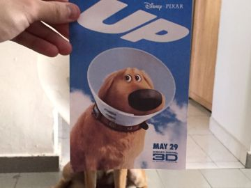 instagrammer-mashes-up-famous-movie-posters-with-real-life-puppies-1