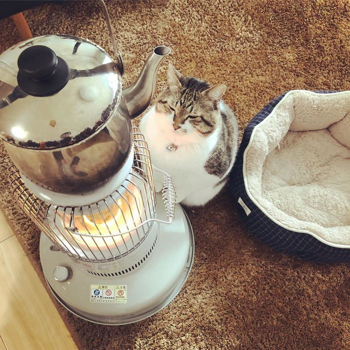 Cat-Falling-In-Love-With-A-Heater-During-Cold-Weather-9Mood-6