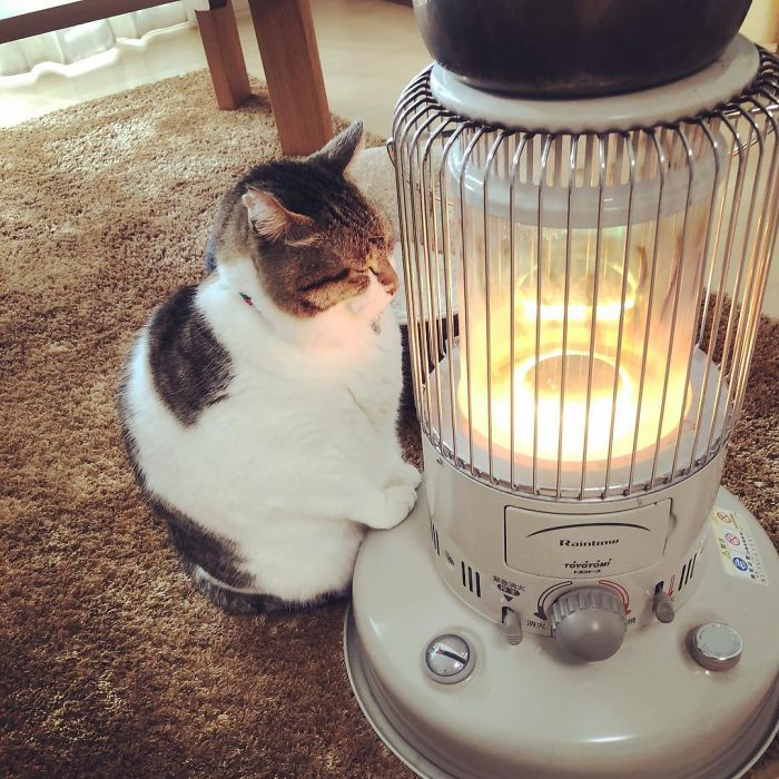 Cat-Falling-In-Love-With-A-Heater-During-Cold-Weather-9Mood-8
