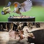 photoshop-battle-winners-20