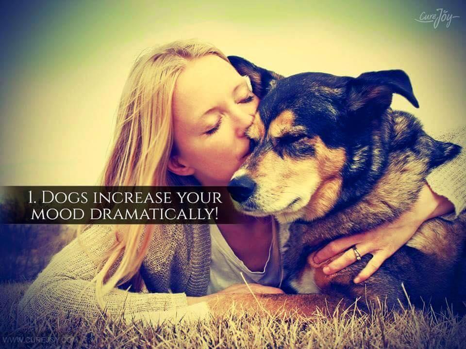 Reason-1-Dog-increase-your-mood-dramatically-via-9Mood