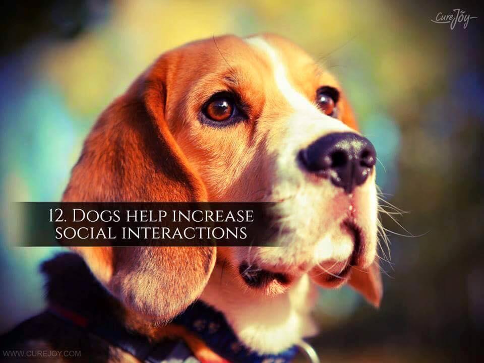 Reason-12-Dogs-Help-Increase-Social-Interactions-via-9Mood