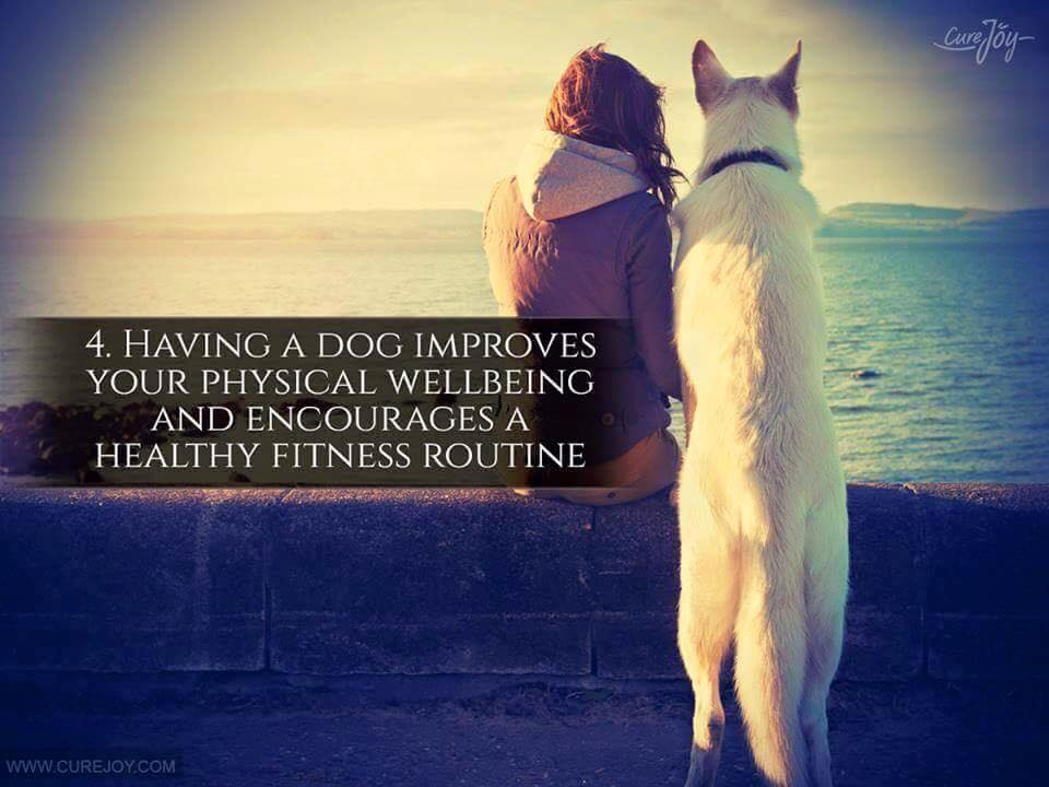 Reason-4-Having-A-Dog-Improves-Your-Physical-Wellbeing-And-Encourages-A-Healthy-Fitness-Routine-via-9Mood