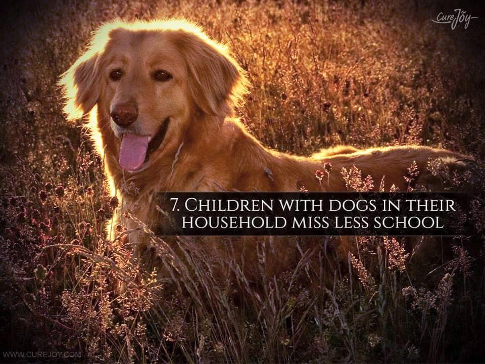 Reason-7-Children-With-Dogs-In-Their-HouseHold-Miss-Less-School-via-9Mood