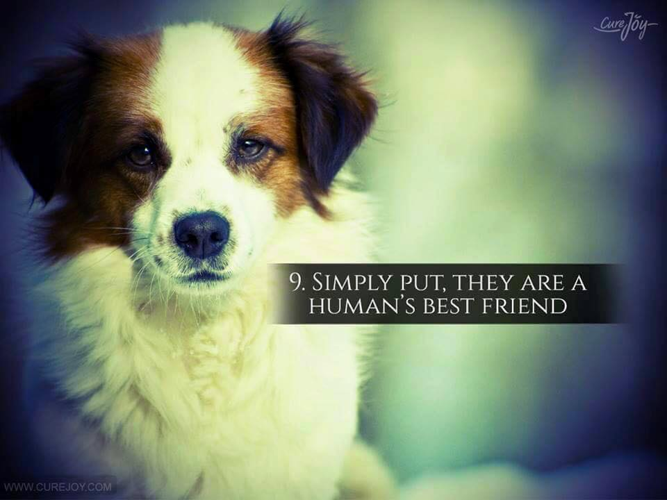 Reason-9-They-Are-Best-Friends-Of-Humans-via-9Mood